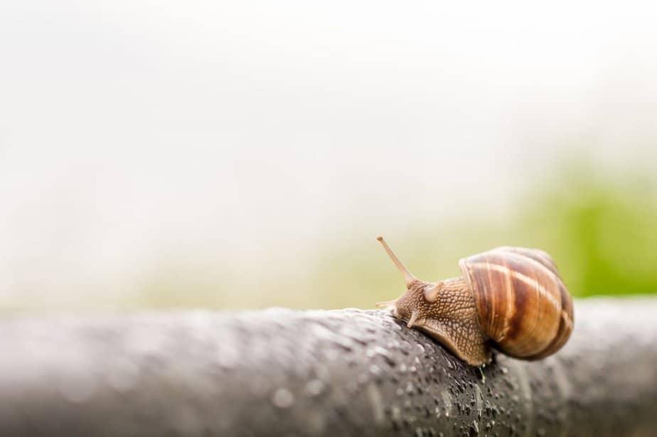 snail-3385348_1280